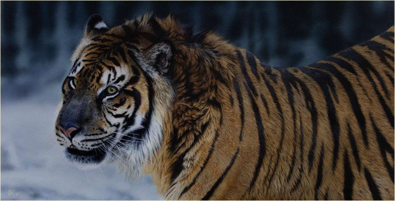 ANIMALES EN PELIGRO DE EXTINCIÓN - Extinción_02