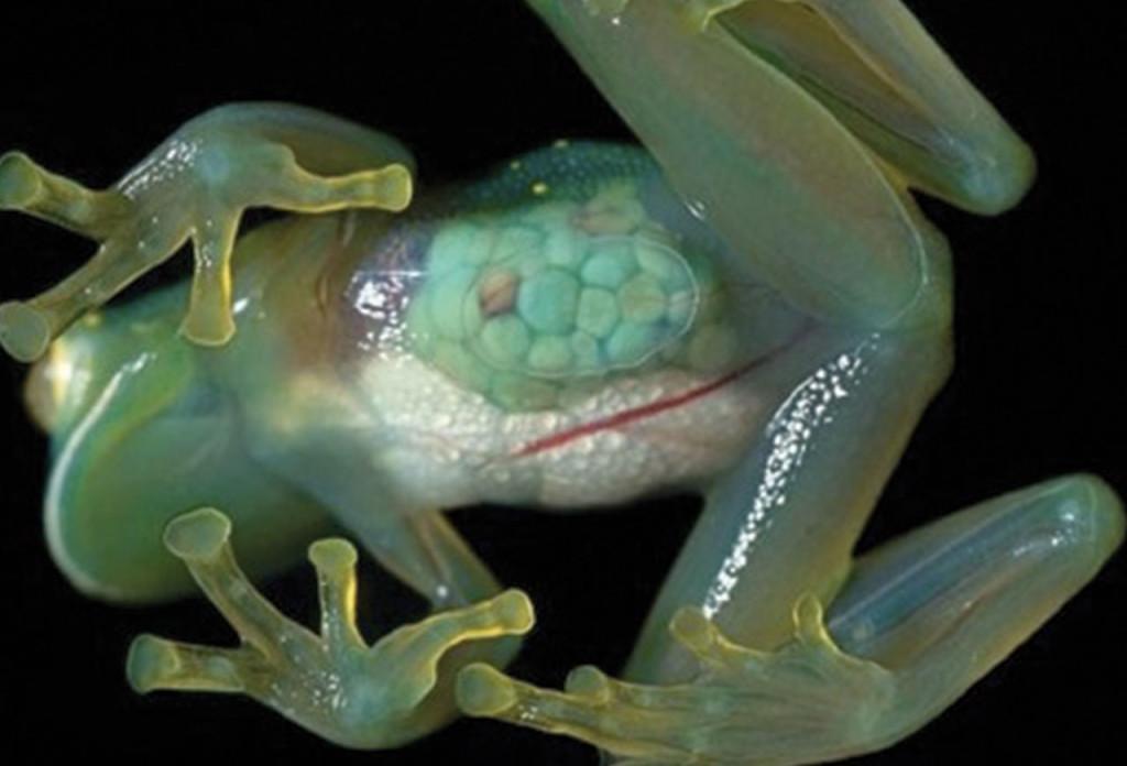 http://webecoist.momtastic.com/2008/12/02/strange-and-bizarre-endangered-animal-species/