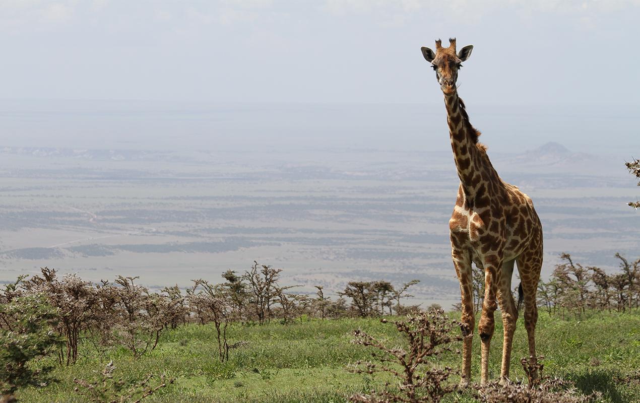 Tanzania - tanzania1