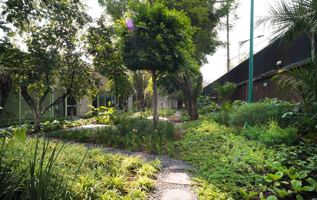 Paisajismo, el arte de decorar con plantas - backyard
