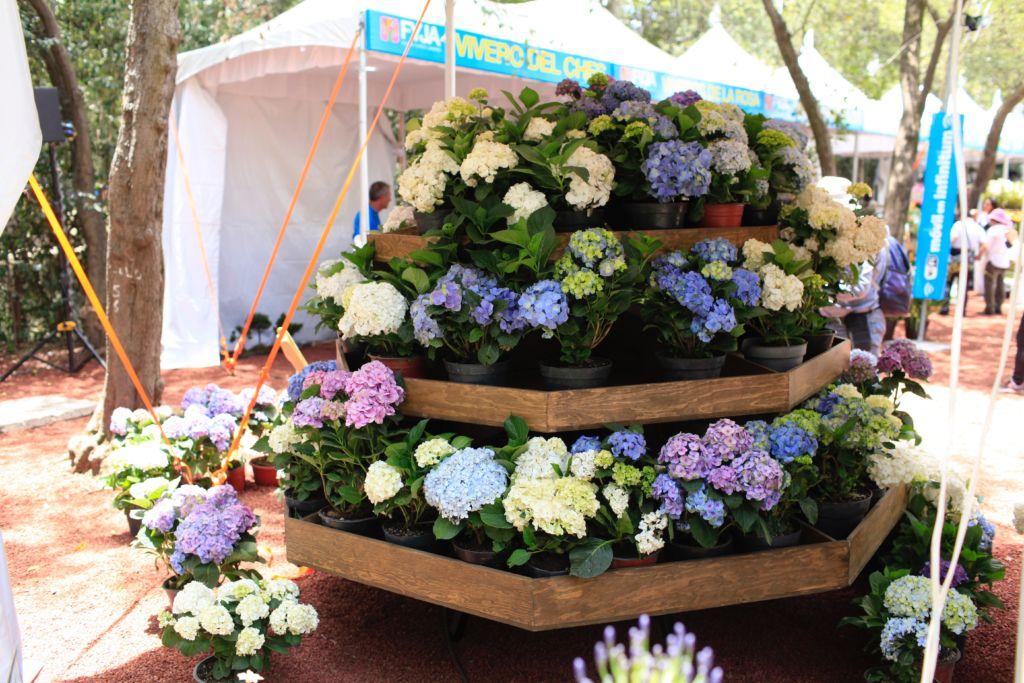 Festival de Flores y Jardines, un espectáculo natural en la Ciudad de México - FYJA 2