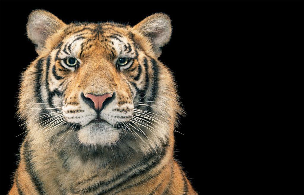 Tim Flach, el fotógrafo que crea conciencia sobre las especies en peligro de extinción - Hotbook_TimFlach_Portada
