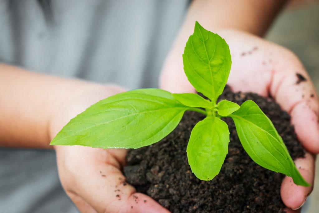 La importancia de la reforestación en nuestra era - reforestación