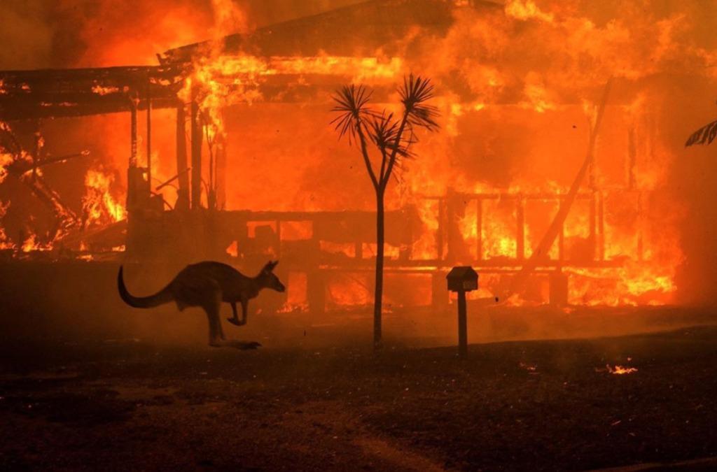 8 asociaciones a las que puedes donar para ayudar a Australia - portada australia