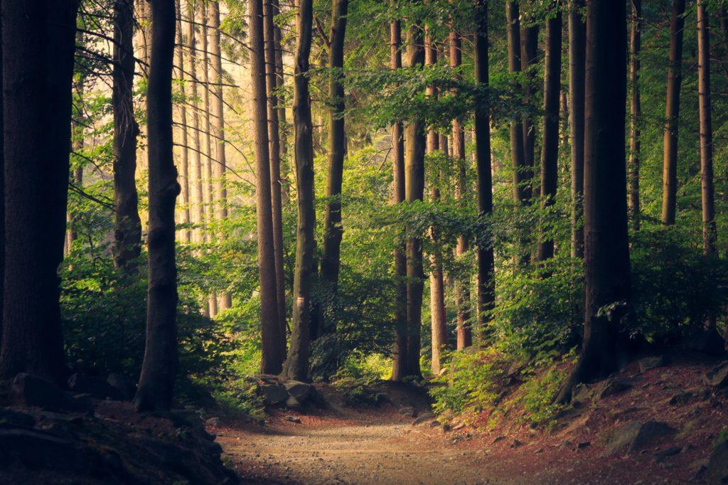 ¿Cómo vincularte otra vez con la naturaleza? - ecolana portada