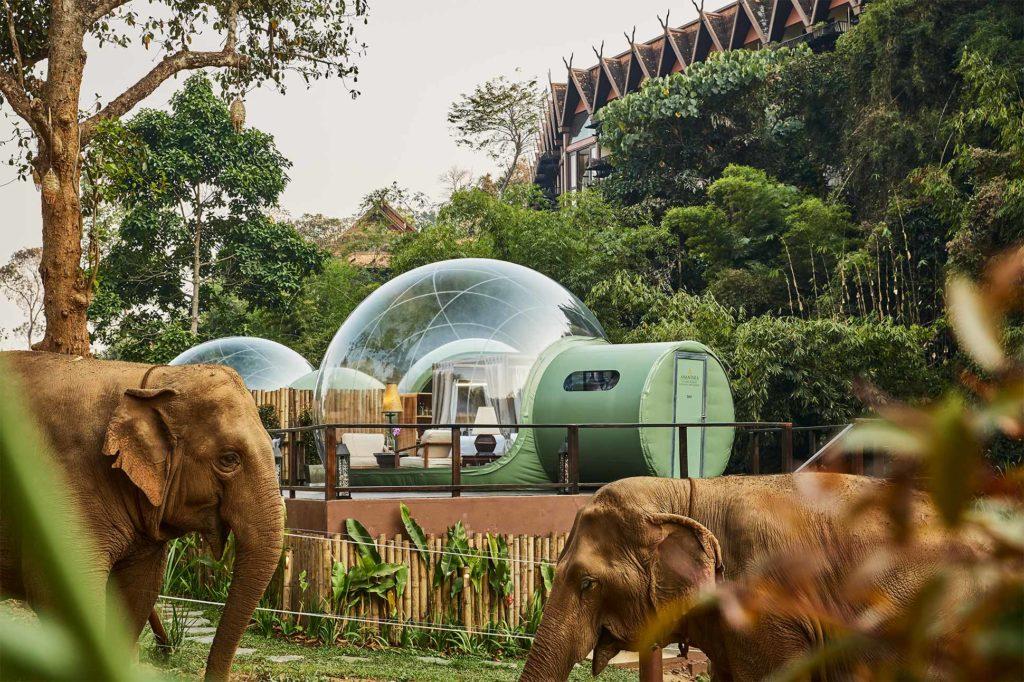 Conoce el hotel que te invita a dormir rodeado de elefantes - portada_