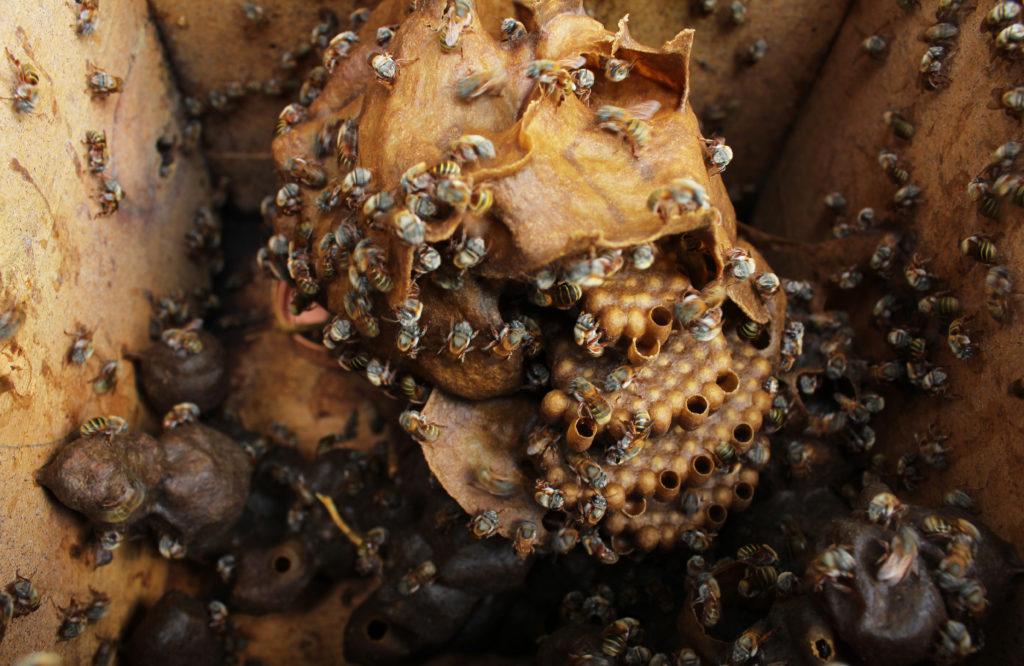 Muuk 'Kaab, la miel de abeja orgánica, sustentable y orgullosamente mexicana - Portada MUKAB la miel de abeja orgánica sustentable y orgullosamente mexicana miel honey foodie Instagram tiktok google amazon miel de abeja organica mercado libre navidad cena de navidad año nuevo recetas comida propiedades de la miel mu