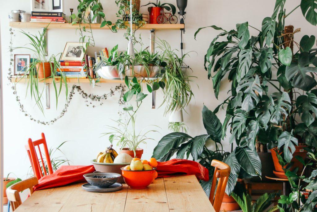 Go green! Plantas para tener un imperdible jardín interior - Link portada - Plantas para tener un imperdible jardín interior