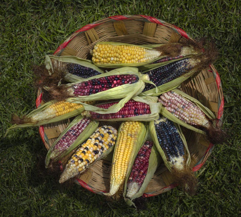 Antojos Certeros, explora lo mejor de la gastronomía de México a través de Lincoln y del lente de Fernando Gómez Carbajal - @fernandocarmela0B1A0951